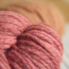 Close-up vibrant pink