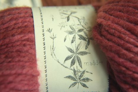 Madder plant - traditional dyestuff